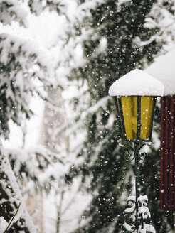Germany, Black Forest, lantern in winter - KRP001264
