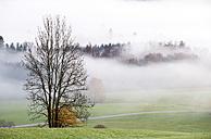 Austria, Mondsee, autumn forest in morning mist - WWF003451