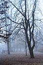 Austria, Mondsee, bare trees in autumn - WW003456