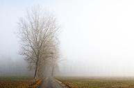 Austria, Mondsee, empty avenue in morning mist - WWF003457