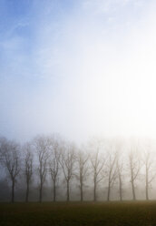 Austria, Mondsee, row of bare trees in morning mist - WWF003544