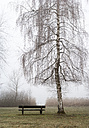 Austria, Mondsee, park bench and bare birch tree in morning mist - WWF003547
