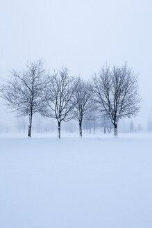 Austria, Mondsee, snow-covered winter landscape - WWF003551