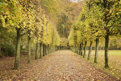 Germany, Duesseldorf, autumnal alley in a park - GUFF000088