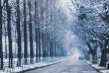 Blurred trees in winter with selective focus on snowflakes - BZF000030