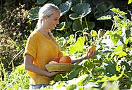 Young woman harvesting pumpkins - WWF003675