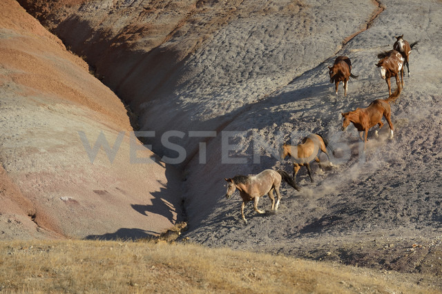 USA, Wyoming, six wild horses running in badlands - RUEF001462 - Martin Rügner/Westend61