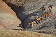 USA, Wyoming, six wild horses running in badlands - RUEF001462