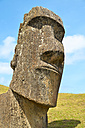 Chile, Easter Island, Moai stone head in Rano Raraku quarry, Rapa Nui National Park - GEMF000197