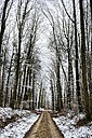 Germany, Constance district, forest track through beech forest in winter - EL001475