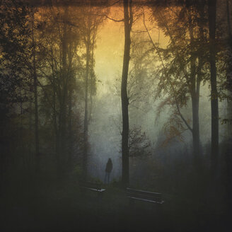 Germany, near Wuppertal, man standing at benches in forest at sunset - DWI000421