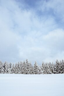 Germany, Baden-Wuerttemberg, Constance district, snow-covered firs - EL001477