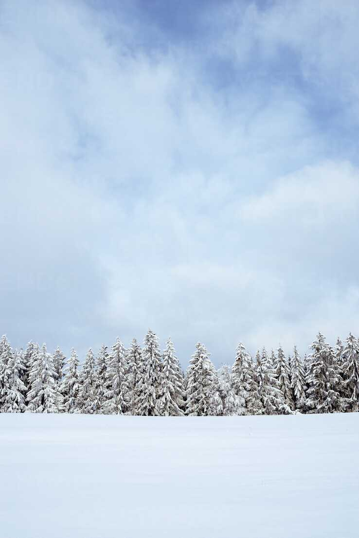 Germany, Baden-Wuerttemberg, Constance district, snow-covered firs - EL001477 - Markus Keller/Westend61