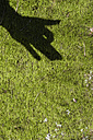 Shadow of children's hand on moss showing a dog - JBF000240