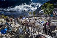 Nepal, Khumbu, Everest region, Namche Bazaar, Mules carrying supplies - ALR000004