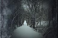 Germany, Wuppertal, Path in winter forest - DWIF000428
