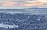 Germany, Saxony-Anhalt, Harz National Park, Coniferous forest in winter after sunset - PVC000259