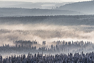 Germany, Saxony-Anhalt, Harz National Park, Coniferous forest and waft of mist in winter - PVC000260