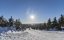 Germany, Saxony-Anhalt, Harz National Park, hiking trail in winter, against the sun - PVCF000270