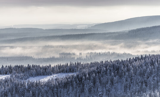 Germany, Saxony-Anhalt, Harz National Park, Coniferous forest and waft of mist in winter - PVCF000266