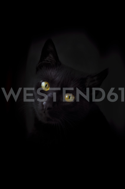 Face of black cat in front of black background - CZF000192