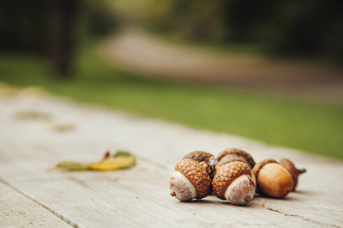 Bulgaria, Sofia, acorns on wooden bench in a park - BZF000038