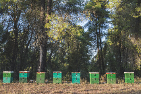 Greece, green beehives, trees in background - DEGF000311