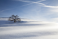 Germany, Baden-Wurttemberg, Swabian Mountains, Tree in snow covered landscape - LVF002832