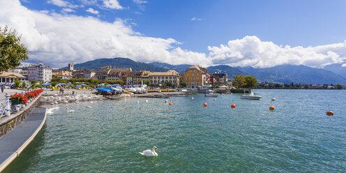 Switzerland, Vevey, Lake Geneva, townscape with swan - WDF002920