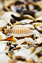 Seashells at coast of the North Sea, Germany - JTF000635