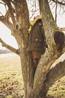 Little boy climbing on a tree in winter - MFF001495