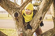 Happy little boy climbing on a tree in winter - MFF001499