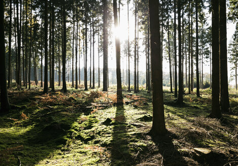 Germany, forest in backlight - PDF000825