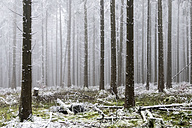 Germany, Hesse, forest in Taunus in winter - ATAF000114