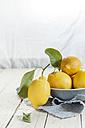 Fresh lemons with leaves - SBDF001696