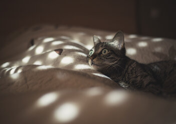 Cat lying on bed - RAEF000047
