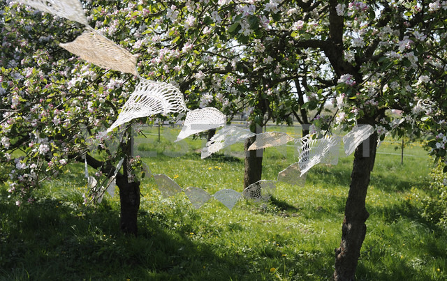 Germany, Hamburg, parts of old crochet tablecloths hanging between blossoming apple trees - GIS000020