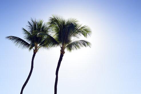 USA, Hawaii, Maui, Kaanapali, palm trees at Kahekili Beach Park - BRF000985