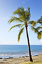 USA, Hawaii, Maui, Lahaina, palm tree on beach - BRF001014