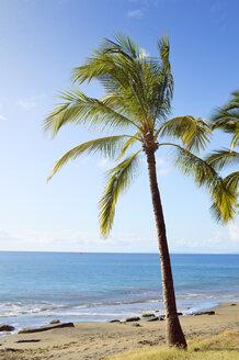 USA, Hawaii, Maui, Lahaina, palm tree on beach - BRF001014
