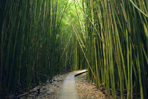 USA, Hawaii, Maui, Haleakala National Park, bamboo forest at Pipiwai Trail - BRF001103