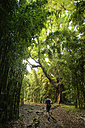 USA, Hawaii, Maui, Haleakala National Park, woman hiking on Pipiwai Trail through bamboo forest - BRF001106