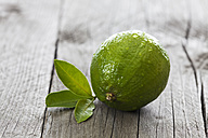 Wet lime with leaves on wood - CSF024694