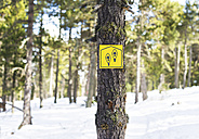 Snowshoes sign on a tree in snowy forest - GEMF000077