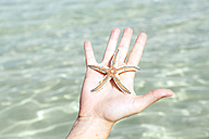 Woman's hand holding starfish - GEMF000085