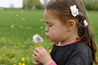 Germany, little girl blowing blowball - LBF001077