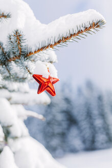 Star-shaped christmas bauble hanging on evergreen tree - BZF000072