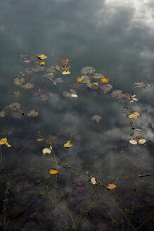 Autumn leaves on water surface of a sea - AXF000750