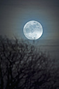 Germany, moon rise with bare tree in the foreground - UMF000750