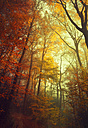 Germany, near Wuppertal, Broad-leaved trees in autumn - DWI000446